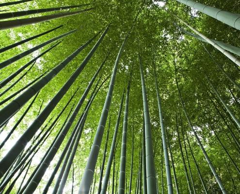 La bambouseraie à Anduze